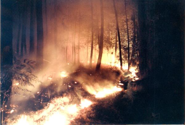 2001 08 05 Incendio Montefalco (PI) - 1