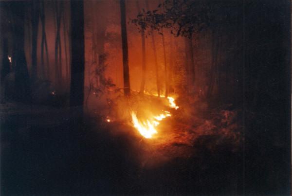 2001 08 05 Incendio Montefalco (PI) - 3